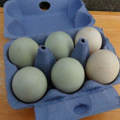 Free Range Duck Eggs (6)