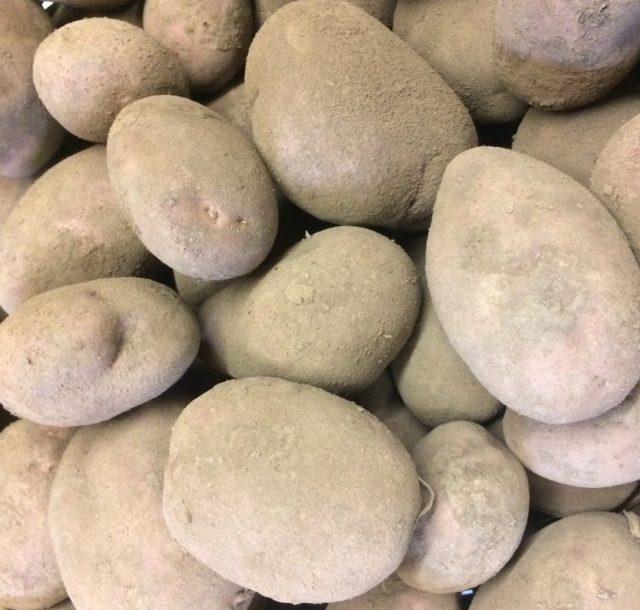 Potatoes Rooster (main crop)