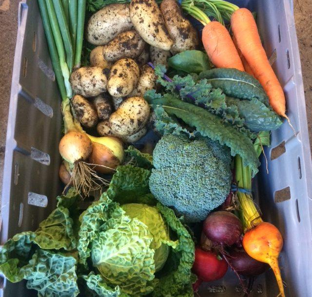 Veggie box (medium)