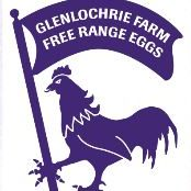 Free Range (Large) Eggs